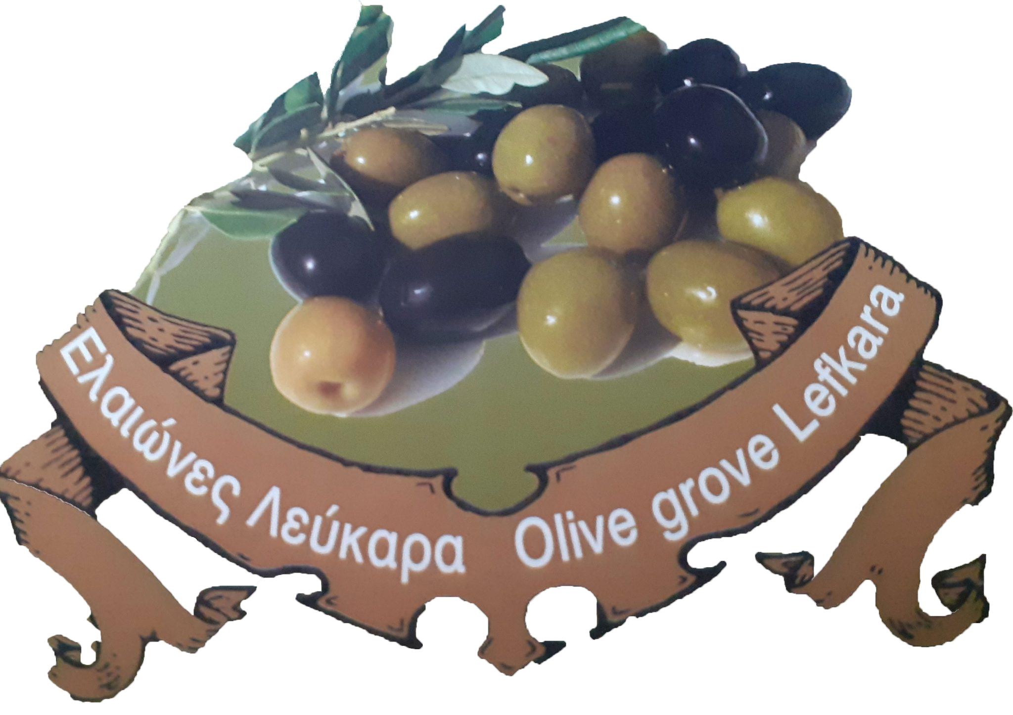 Olive Oil Yi